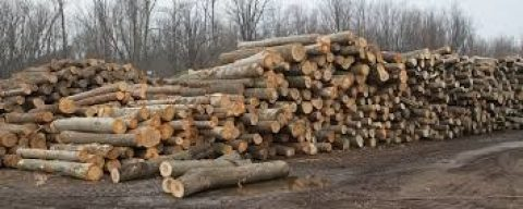 TACKLING ILLEGAL LOGGING IN GHANA: WHY CIVIL SOCIETY IS GENERATING PRESSURE TO DELIVER A VPA