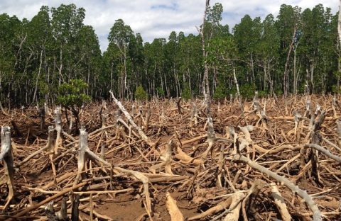 Civic Response: Addressing the Problem of Deforestation in Ghana One Step at a Time
